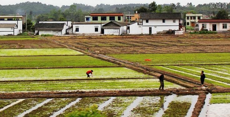 农村创业点子