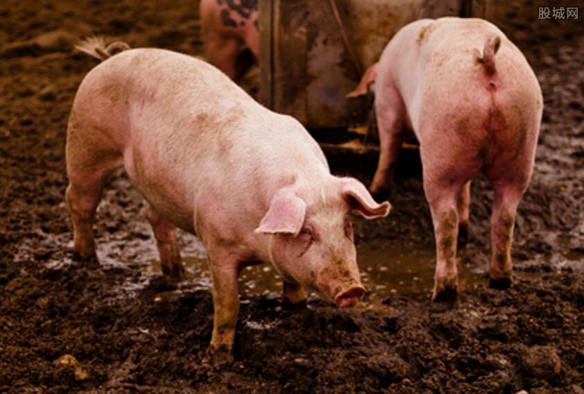 2018年养猪前景如何