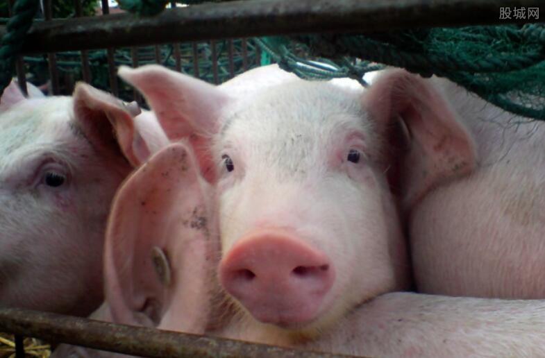 养猪赚钱吗