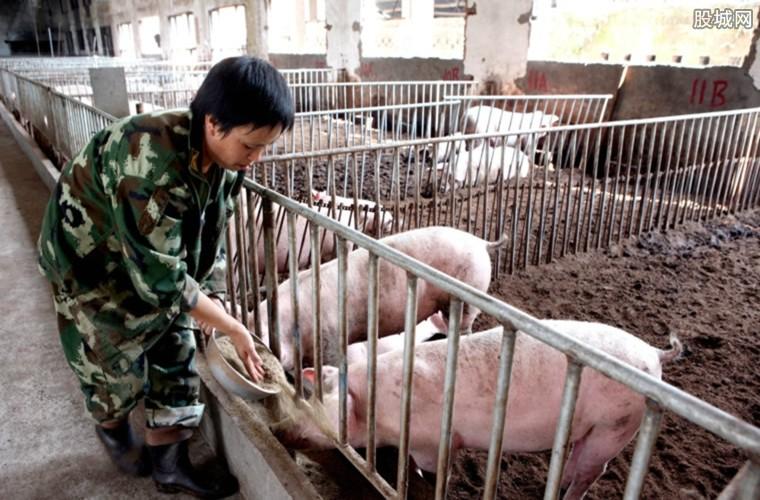 养猪业调查结果