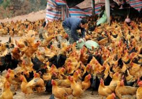 农村养殖什么项目赚钱 养殖业这些项目行情好