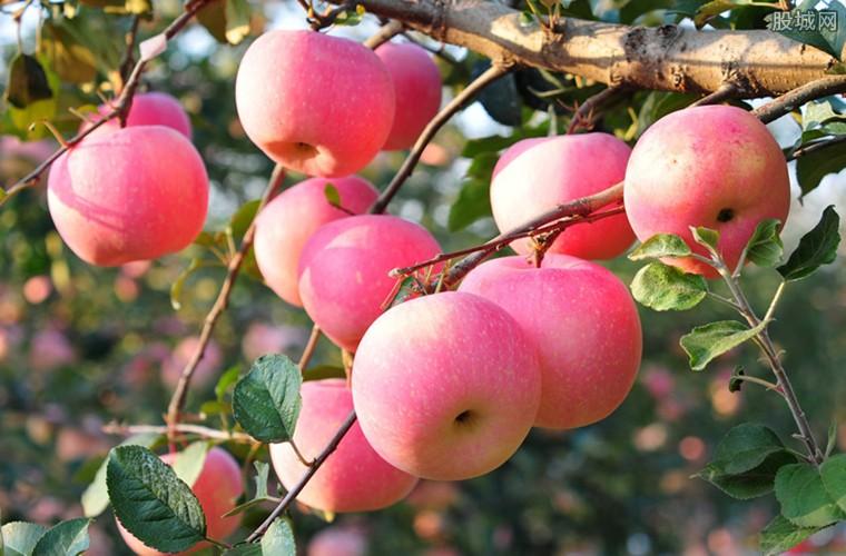 平安夜创意销售苹果