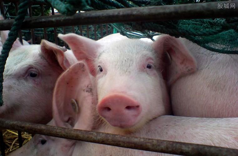 养猪补贴好消息