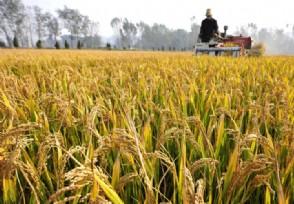 2020粮食补贴一亩多少钱 一般什么时候下发