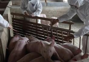 农村养殖业养什么有前景 这3种养殖项目比较赚钱