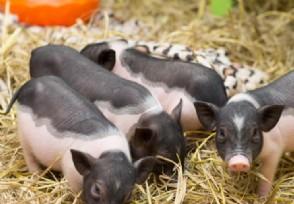 猪价或影响家禽行情 2020养殖业还赚钱吗?