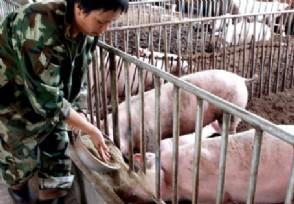 养50头猪国家补贴多少 竟然可以领到这么多
