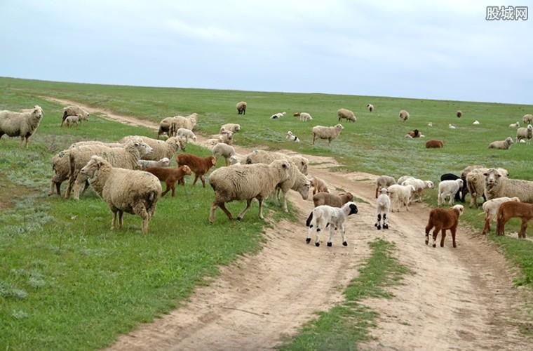 牧场养什么最赚钱 值得推荐的农村养殖项目