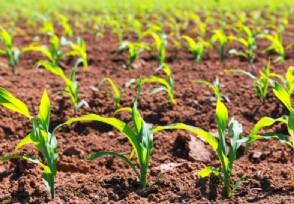 农村创业种植好项目 这几个有发展前景