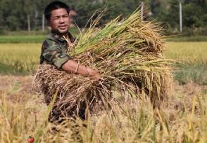 明年取消农民补贴吗 这些福利仍然可以享受