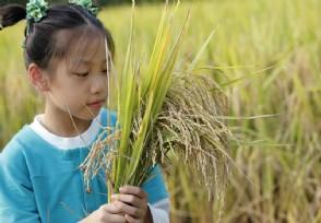 农村最赚钱的行业创业可以考虑这几个项目