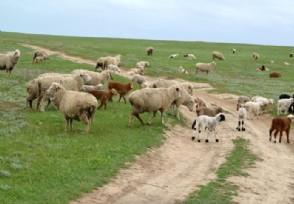 养殖业什么前景最好 两大养殖项目可以考虑